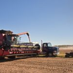 Grain harvest market update