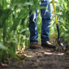 How Growers Can Achieve Nutrient Efficiency